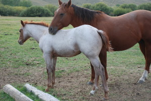 Kimber 2014 filly out of Smart Smoke Rio an by Playguns Lil Star