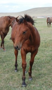 Rodeo 2014 stud colt out of A Blurred Stone and by Wind Her Up Nic